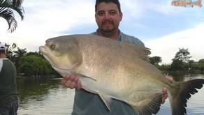 Clube de Pesca Lago Verde – Dia das Crianças com muito peixe grande