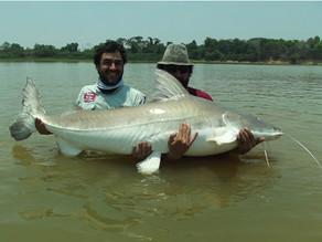 Rio Araguaia - A Piraíba dos Penn-Raíba
