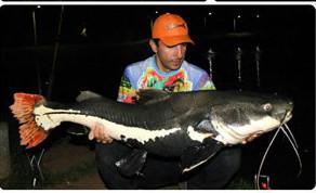 Pesqueiro Estância Igrejinha – New Point com bons Redondos e grandes Pirararas