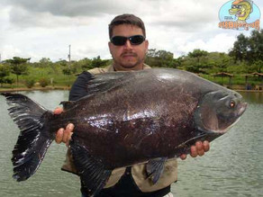 Clube de Pesca Pescar – Mais um reduto de gigantes no cerrado brasileiro