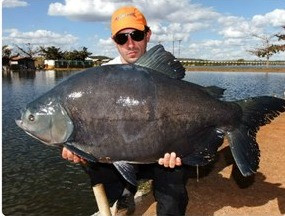 Clube Pescar – Muitas fisgadas e adrenalina na ponta da linha