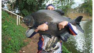 Pescaria sensacional no Pesqueiro Monte Negro