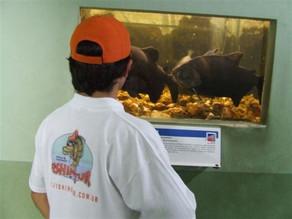 Aquário – Instituto de pesca – Todas as espécies em um único lugar