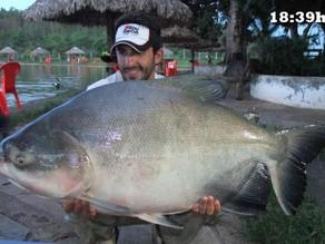 Clube de Pesca Paraíso Verde – Peixes e mais peixes com nossa equipe em Goiás