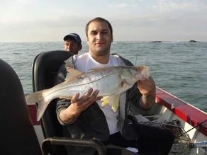 Pescaria em Bertioga – Muitos robalos e outras espécies no litoral paulista.