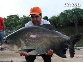 Clube de Pesca Lago Verde – Poucas horas e muitos peixes fisgados