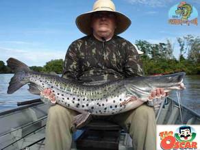 Fishingtur no Pantanal – Um show de peixes nas águas pantaneiras