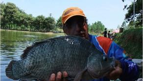Um dia de Pescaria no Pesqueiro Monte Negro