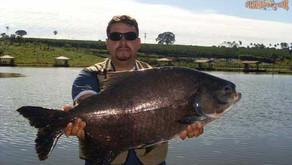 Pesqueiro Engenho Velho – O Fishingtur descobre outra opção para os goianos