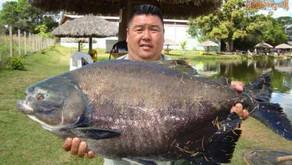 Pesqueiro Paraíso Verde – Uma grande aventura de nosso amigo Júnior em Goiás