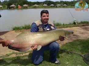 Pesqueiro Paraíso Verde – Veja o Troféu com mais de 65 kg