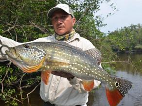 Rio Uatumã -  Em buscas dos grandes e fortes Tucunarés