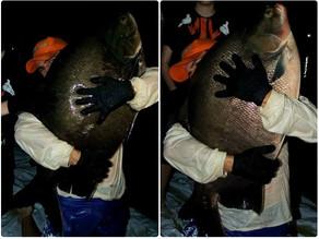 Pesqueiro Monte Negro – Soltura dos Tambacus Gigantes com o Fishingtur