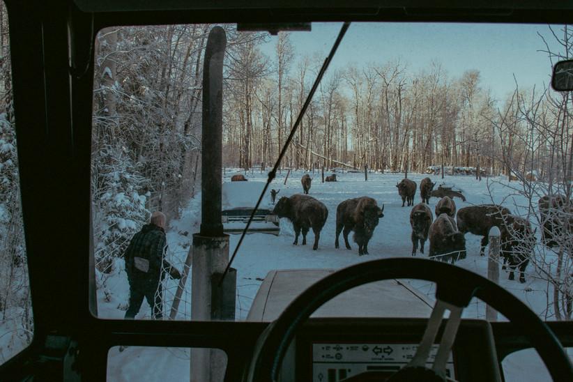 Peter Kuelken - Bison Farmer