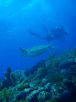 diving with turtles.jpg
