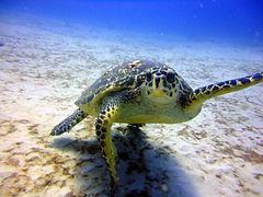 17. Turtle.jpg