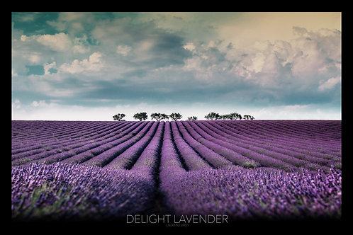 Delight Lavender