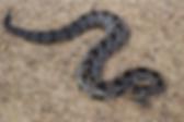 pest control, snake repellant