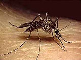 mosquito treatment, pest control