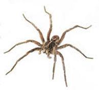 pest control, spider control