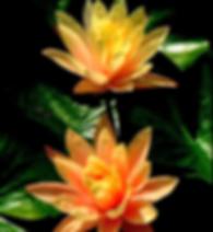 lotus o.png