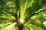 arbre-lumiere-900-600.jpg