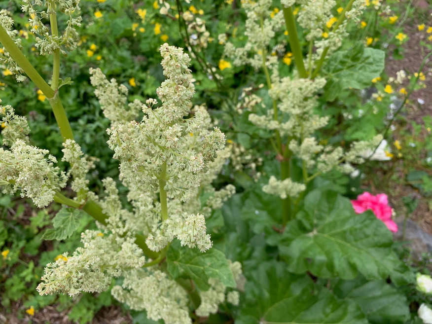frothy flowers May 5