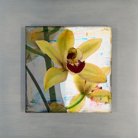 Yellow Orchid 1