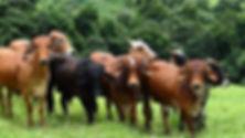 ag livestock.jpg