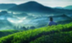 Farmer Tea Plantation Malaysia Culture O