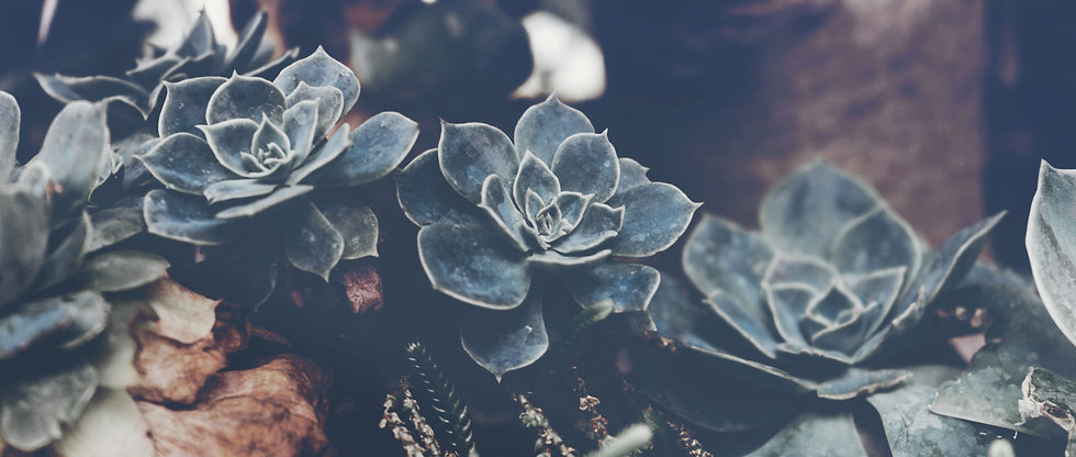 Succulents_edited.jpg