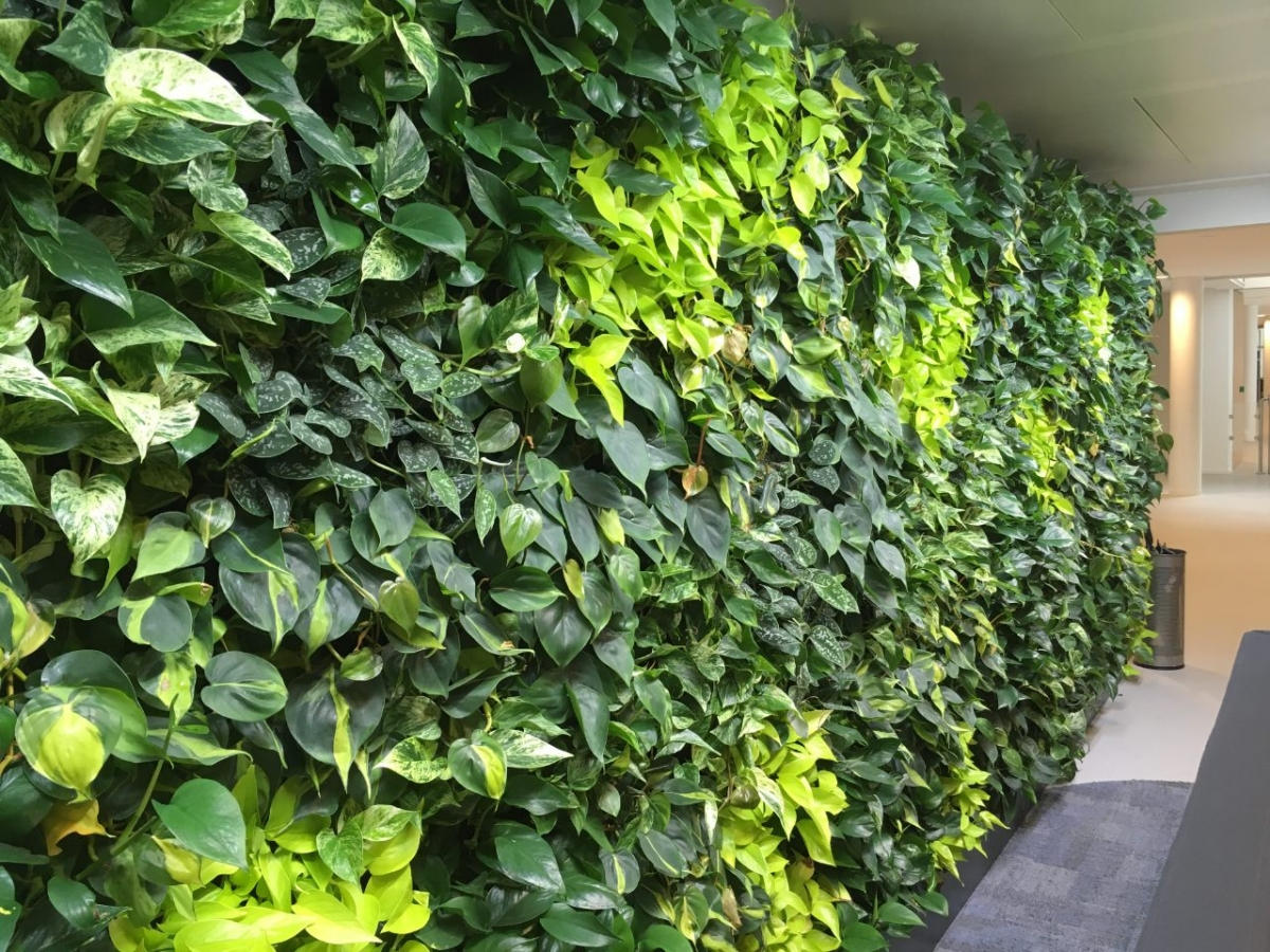 nextgen-living-wall-98.jpg
