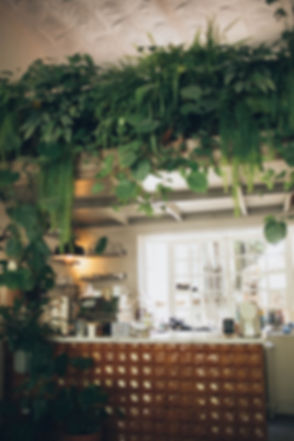 kitchen-surrounded-with-green-house-plants-1841584_edited.jpg