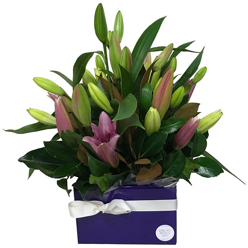 Fabulous Box of Coloured Lillies