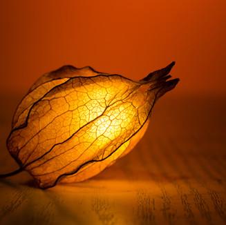 Osvětlené Flower Bud
