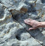 Dinosaur Ridge Colorado - Creatceous Igu