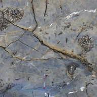 Fossiliferous limestone - Pennsylvanian