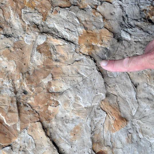 Dinosaur Ridge Colorado - Cretaceous lea