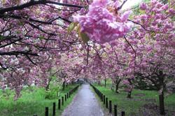 春北海道大学