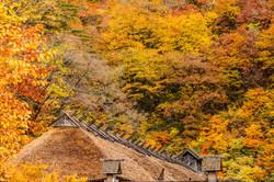 紅葉とかやぶき屋根