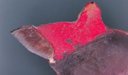 Carbide Blade Under The Microscope