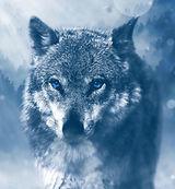 wolf-1836875_1280_edited_edited_edited.j