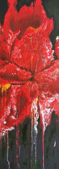 Red Iris 30 x30 R2500.jpg