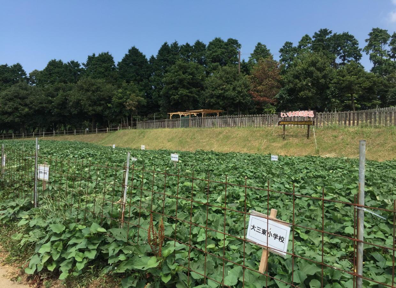 体験農場 といも大作戦の農場です