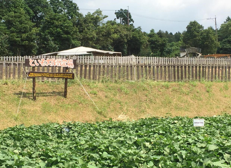 といも大作戦 体験農場