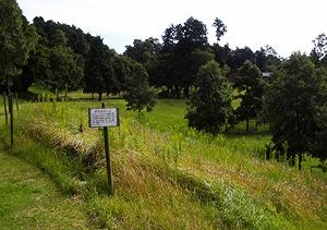 自然との共生 タイワンツバメシジミ(蝶)保護区域