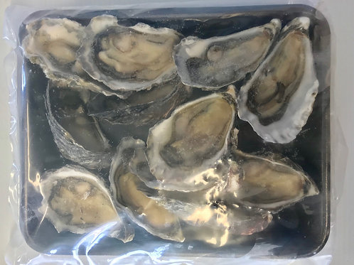 NZ Oysters Large