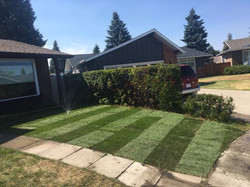Hi Jason_I want to thank you for doing such a great job on my lawn for what I consider to be a reaso
