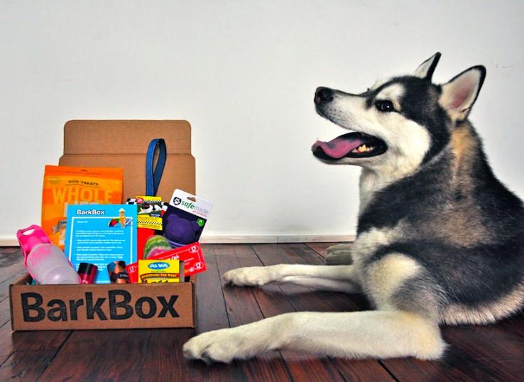 barkbox.jpeg