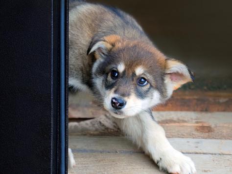 Puppy Socialization 101